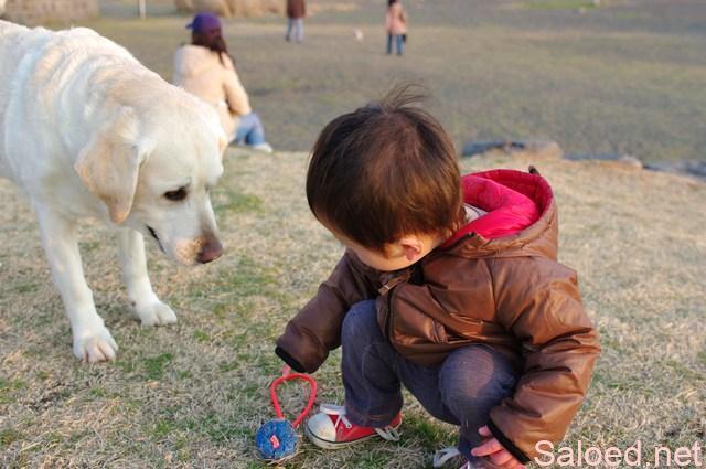 幼い子とペット 白い犬