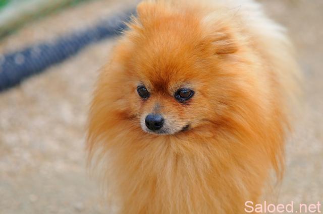 ペット 犬 小型犬