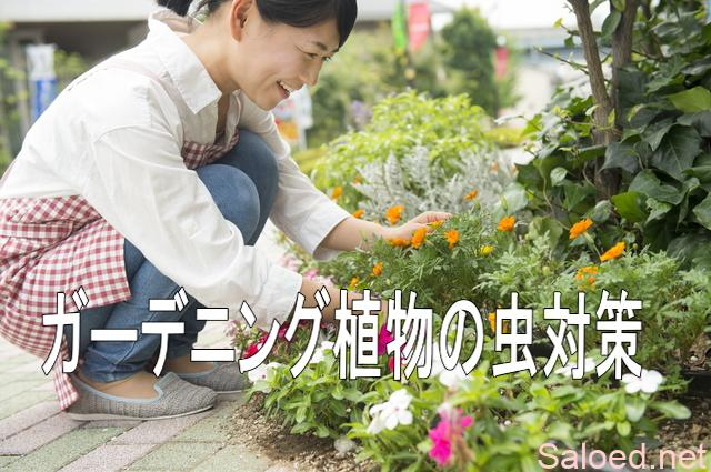 ガーデニング植物の虫対策